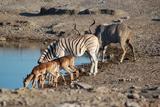 Найзахоплюючі національні парки Африки