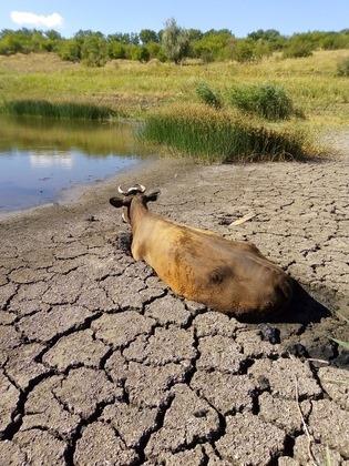На Донбасі почалася екологічна катастрофа. Окупація в буквальному сенсі робить території непридатними для життя