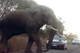 """Національний парк """"Піланесберг"""" – на зустріч із африканськими тваринами"""