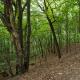 Лиса гора у Києв