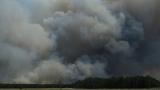 На Херсонщині горить 1500 гектарів лісу
