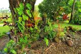 Національний парк Халеакала на острові Мауї