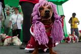 Фото вихідного дня. 15-16 грудня. Розстріл людей у США, собачий конкурс різдвяних костюмів у Перу та інше