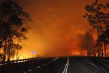 Фото дня. 9 січня. Більше сотні людей в Австралії вважаються зниклими безвісти через пожежі, фестиваль незвичайних повітряних куль в Індії та інше