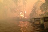 В Австралії через аномальну спеку вирують лісові пожежі