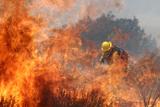 Лісова пожежа у США. Майже п'ять тисяч гектарів охоплено вогнем