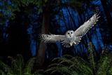 Кращі фотографії диких тварин за 2013