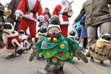 Різдвяний марш пінгвінів у Південній Кореї
