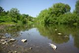 Чим забруднені найбільші ріки України