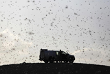Фото дня. 6 березня. На територію Ізраїлю вторглися полчища сарани, заворушення в Єгипті та інше