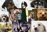 Топ-10. Найпопулярніші породи собак