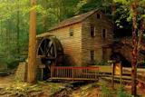 Найкрасивіші будинки в лісі