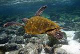 Подорож на Галапагоські острови