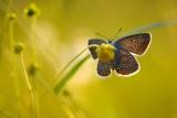 Найкращі фотографії конкурсу «Дика природа Росії-2013»