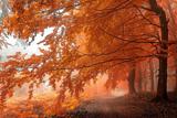 Найпрекрасніші лісу світу