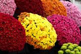Найбільша в Європі виставка квітів