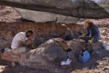 В Аргентині знайдені останки найбільшого динозавра на планеті