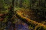Унікальний Національний природній парк «Прип'ять – Стохід»