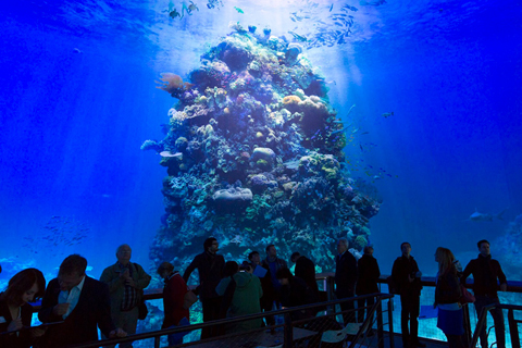 У Німеччині відкрили панораму Великого Бар'єрного рифа