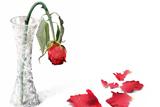 Трояндо, ти хворієш
