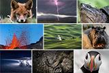 Кращі знімки National Geographic 2016