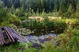 Озеро Журавлине. Таємниче та унікальне