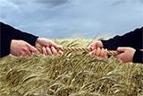 Фермери vs агрохолдинги