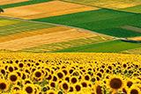 Ринок землі: буде, але не одразу (соціологія)