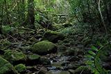 Дивовижна природа тропіків Квінсленда