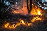 Військові та ДСНС гасять пожежі на Луганщині