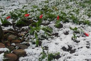 На травневі свята Польщу завалило снігом
